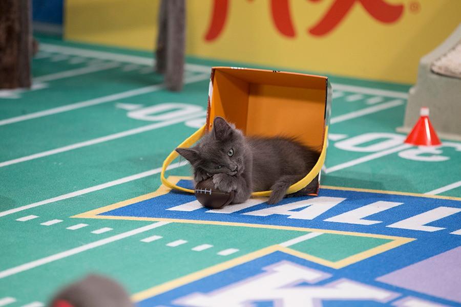 kitten-bowl-4_Web