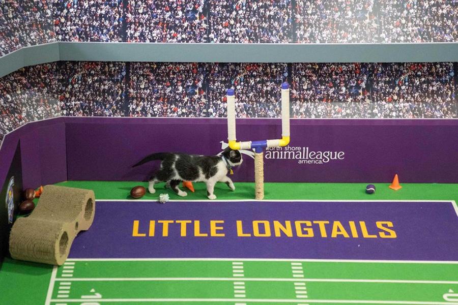 USP NFL: Super Bowl LII-Kitten Bowl